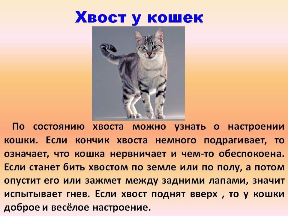 Почему кошки виляют хвостом