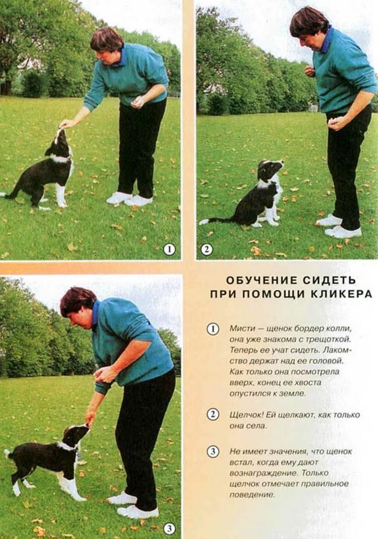 Как научить собаку команде «голос»: породные и психологические особенности, выбор места дрессировки