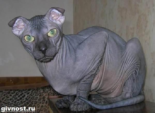 Донской сфинкс: россиянин с инопланетной внешностью