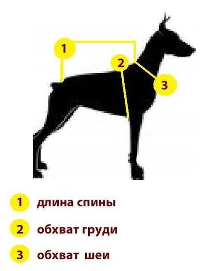 Как определить размер одежды для собаки?