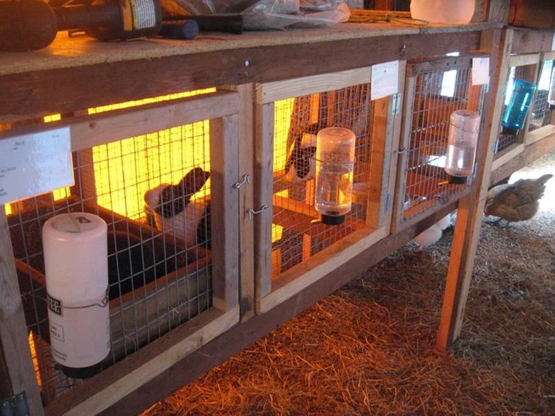 Разведение кроликов в клетке - способы, клетки для кроликов - как сделать, фото | россельхоз.рф