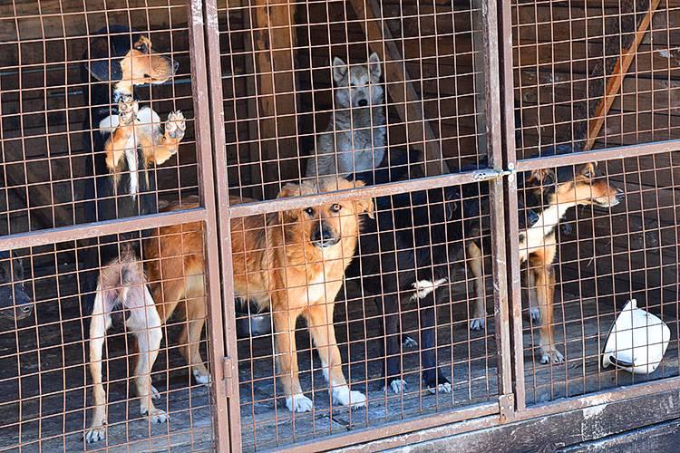 Приют для собак в москве и московской области. подарите жизнь другу
