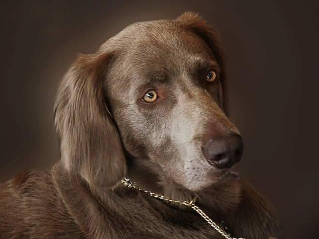 Частое чмоканье ртом у собак. собака постоянно облизывается: возможные причины и методы лечения