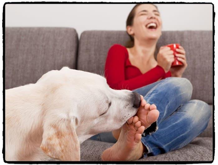 Почему щенок чихает. почему собака чихает? если у собаки покраснение глаз и сопли