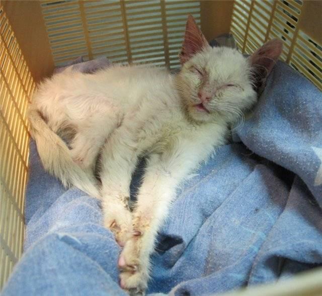 Обезвоживание у кота лечение в домашних условиях | портал о народной медицине
