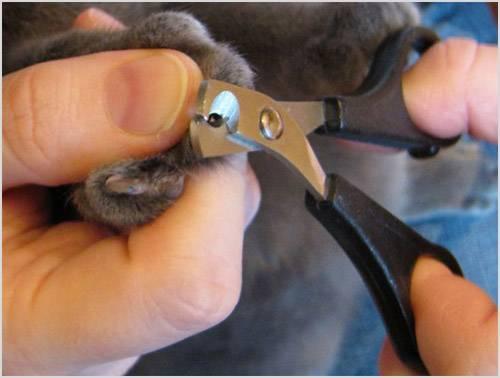 Как подстричь когти кошке, подрезка когтей в домашних условиях