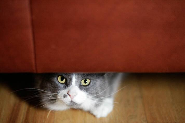 Если кошка спит в вашей постели, что это значит: приметы и объяснения | твойдень