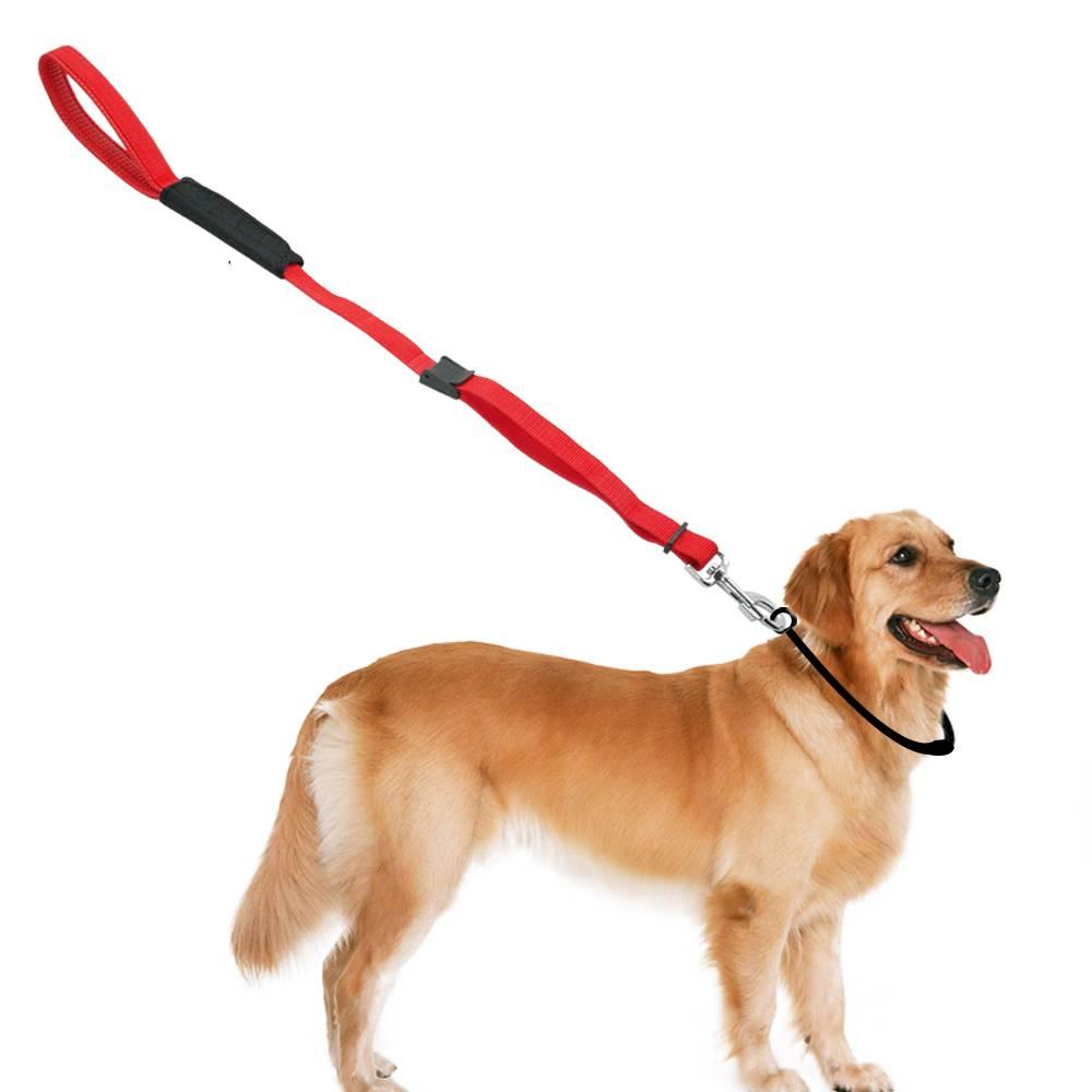 Как приучить щенка к поводку
