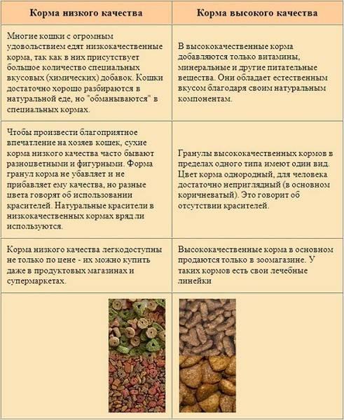 Чем кормить котенка в 3-4 месяца: рацион питания, режим