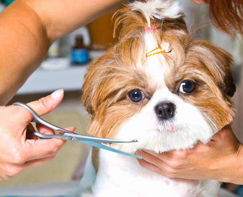 Можно ли стричь усы собаке? | все о собаках