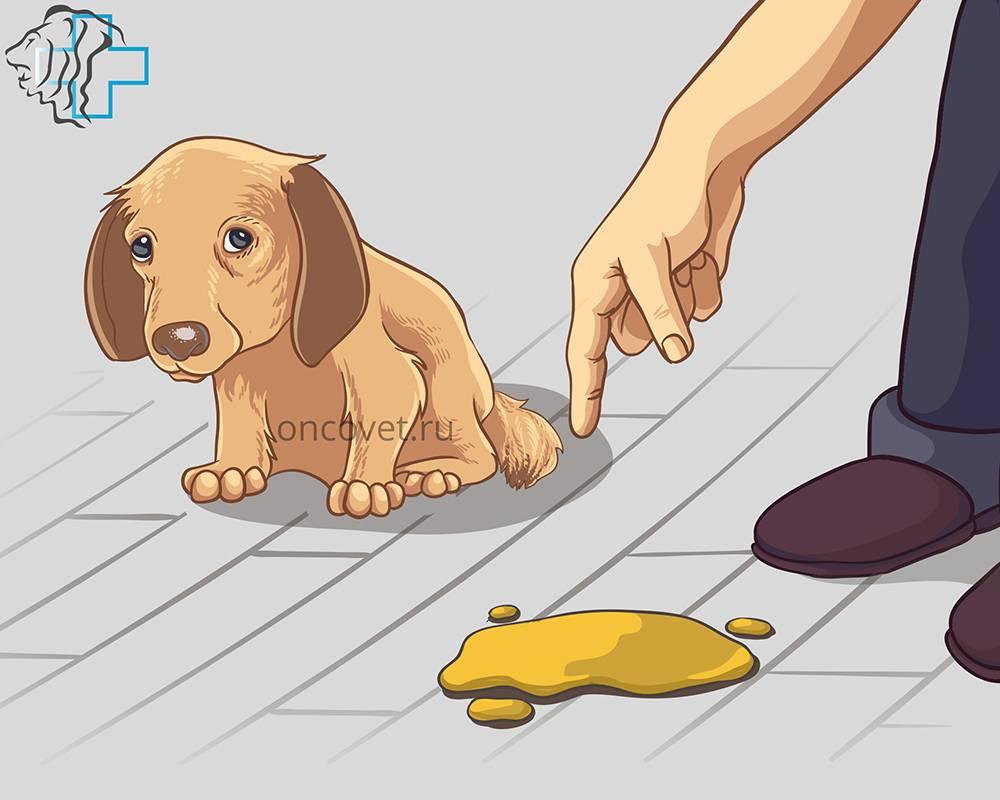 Собака ссыт на диван: что делать, как отучить собаку писать на кровать
