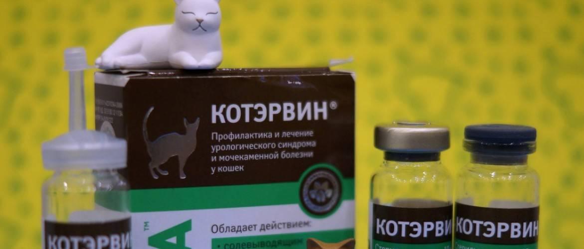 Кантарен инструкция по применению для собак. кантарен - инструкция по применению для кошек, показания, дозировка. применение раствора для инъекций - новая медицина
