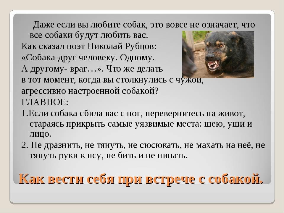 Собака кидается на других собак, что делать? действенные методы корректировки поведения