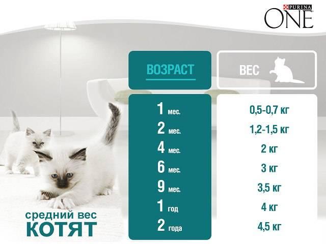 Примеры сколько должен весить котенок в зависимости от его возраста