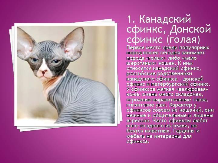 Сколько стоит кошка сфинкс: цены в россии