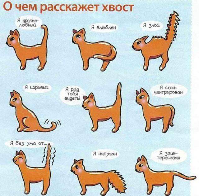 Почему кот дрожит всем телом, будто ему холодно: причины тремора у котят и взрослых кошек