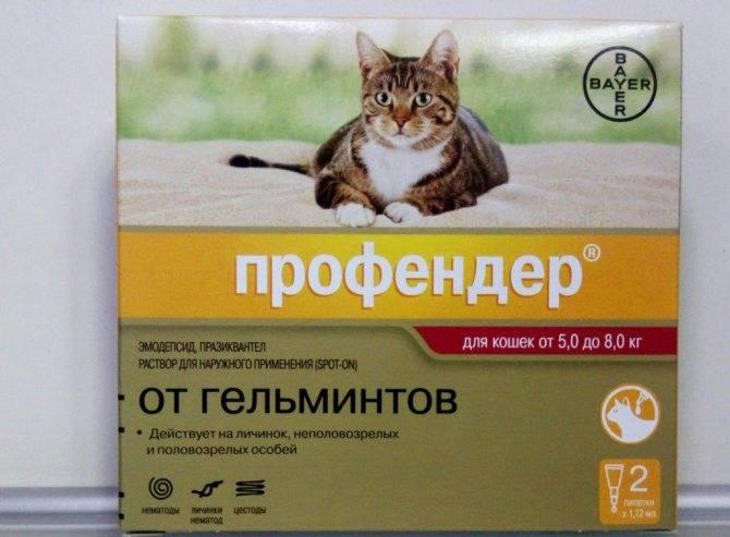 Каниквантел от глистов для кошек: инструкция, дозировка, противопоказания и эффект