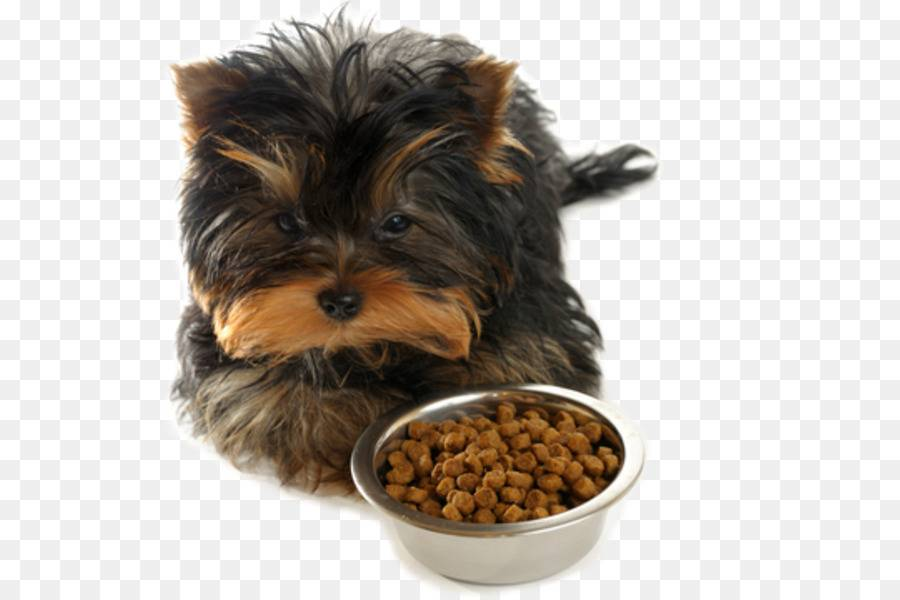 Чем можно и нельзя кормить йоркширского терьера — диета для всех возрастов ⋆ собакапедия