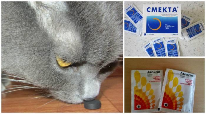 Можно ли давать активированный уголь кошкам при запоре