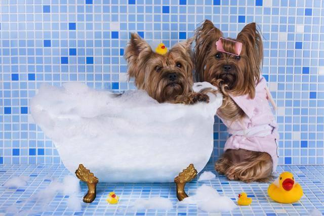 Как часто можно купать собаку в домашних условиях, как правильно мыть и каким шампунем