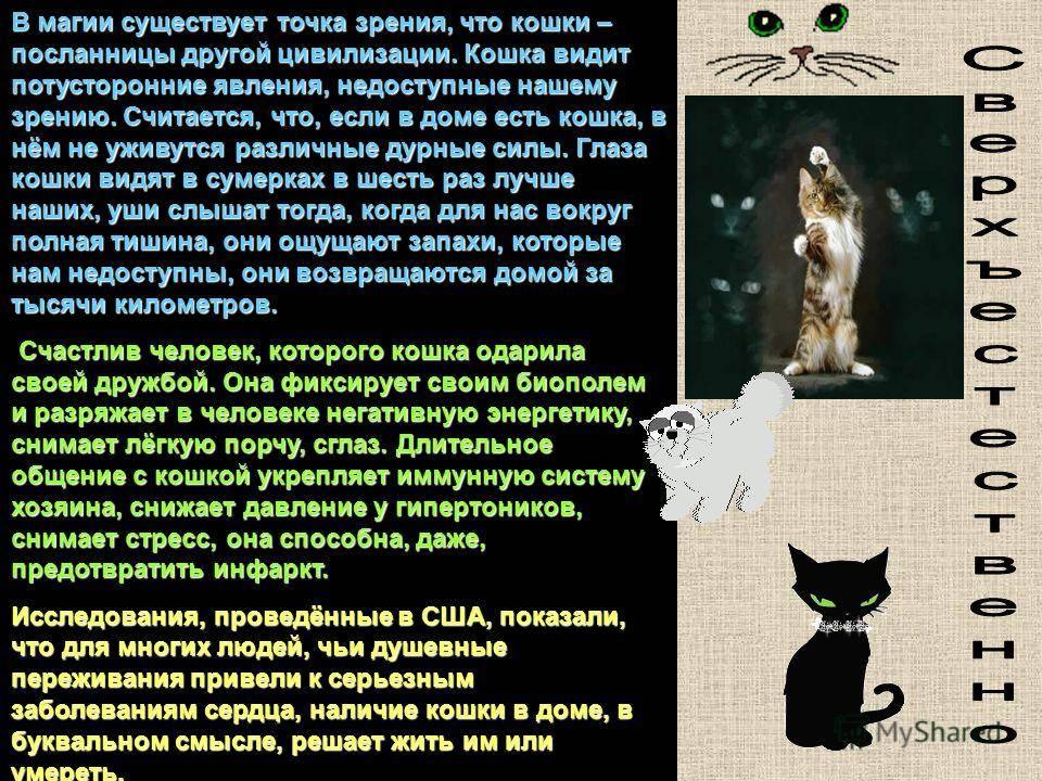 Особенности кошачьего языка и краткий словарь переводчик