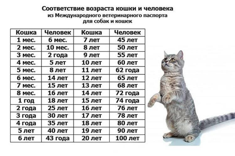 Возраст кошки по человеческим меркам: таблица соответствия