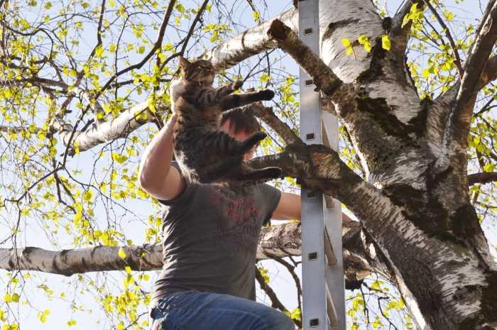 Действенные способы, чтобы быстро снять кошку с высокого дерева самостоятельно