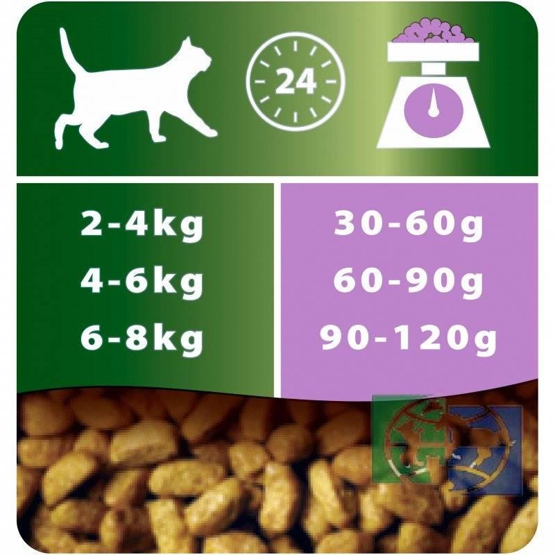 Как выбрать корм для собаки: главные правила