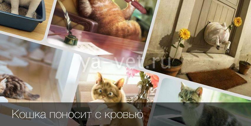 Как и чем лечить понос у кошки в домашних условиях: советы