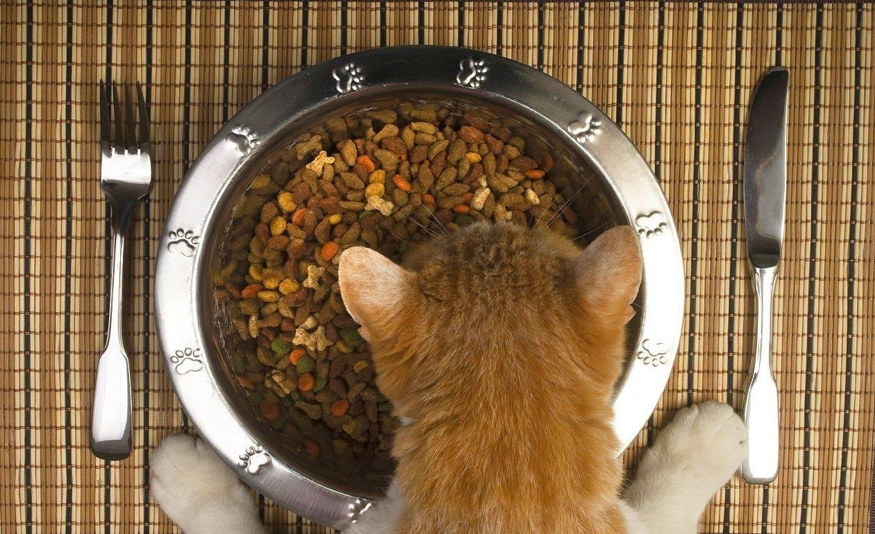 Помогаем кошкам пережить жару