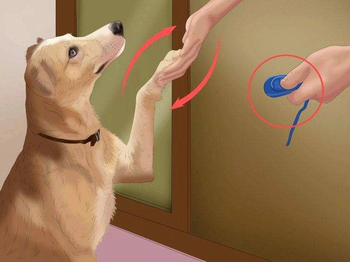 Как научить собаку команде «ко мне»: просто и понятно