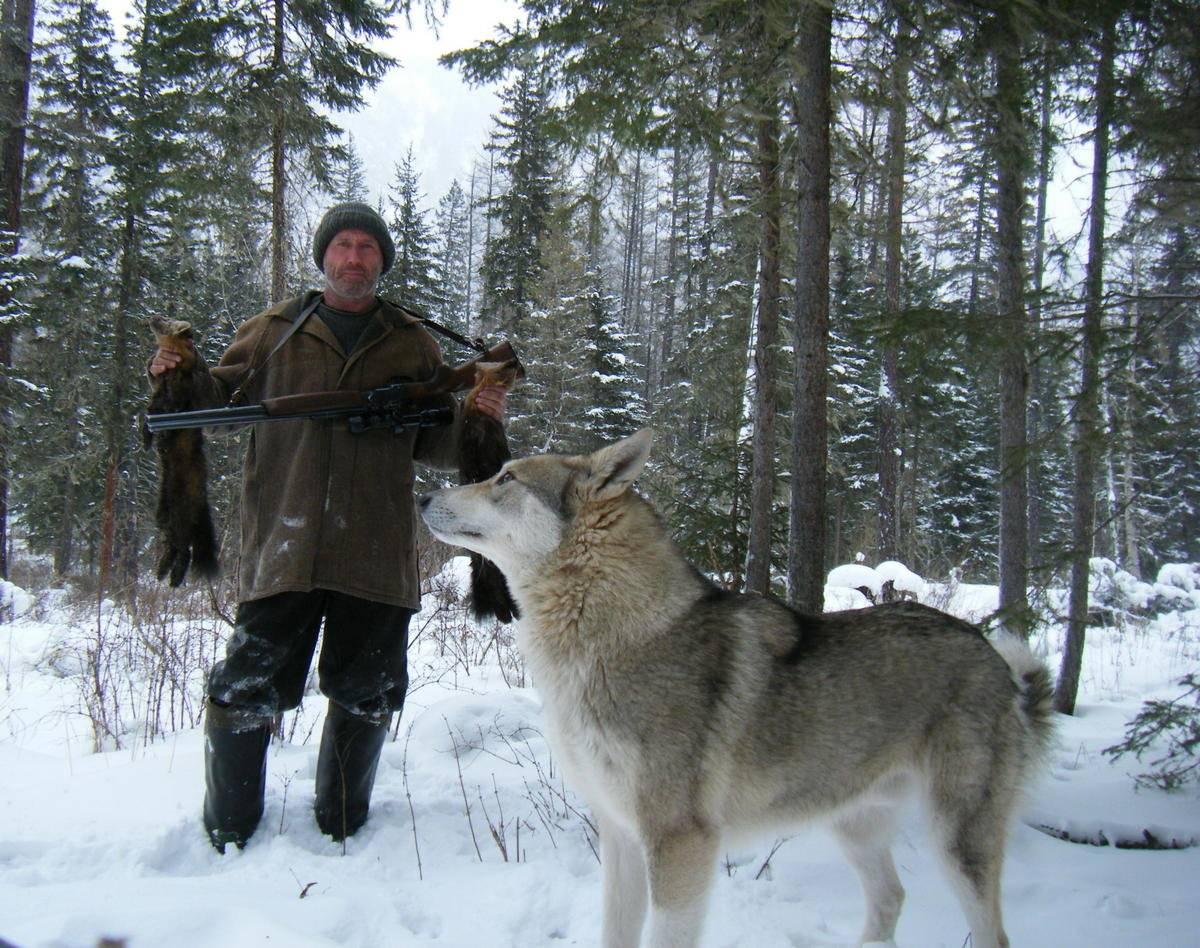 Натаска лайки – правила дрессировки и воспитания охотничьей собаки