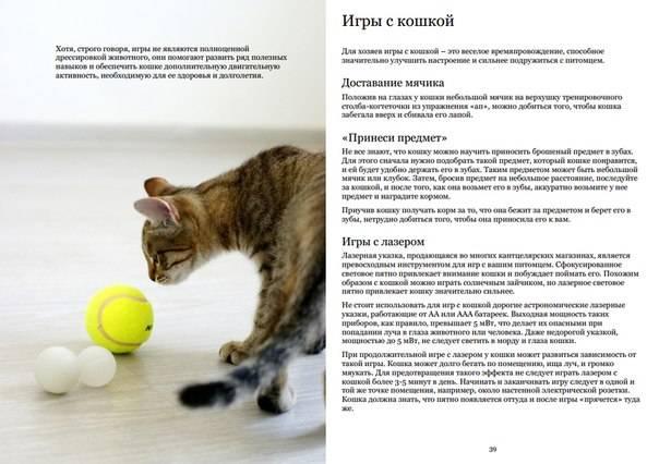 Как начать разводить кошек   выгодно ли, какие есть выгодные породы котов