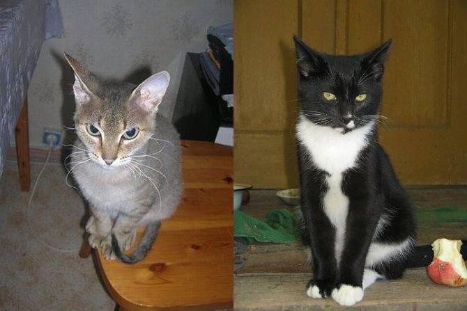 Как отличить кота от кошки: ? определение пола котенка за 1 минуту
