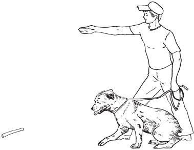 Окд, общий курс дрессировки собак: описание основных команд и рекомендации