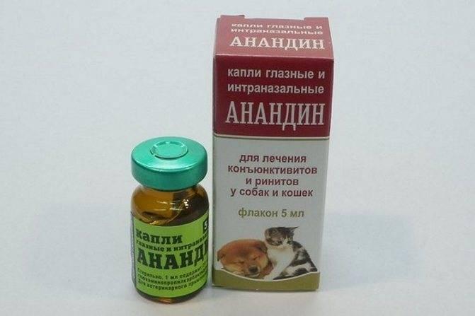 Анандин: лечим воспаления у кошек быстро и эффективно