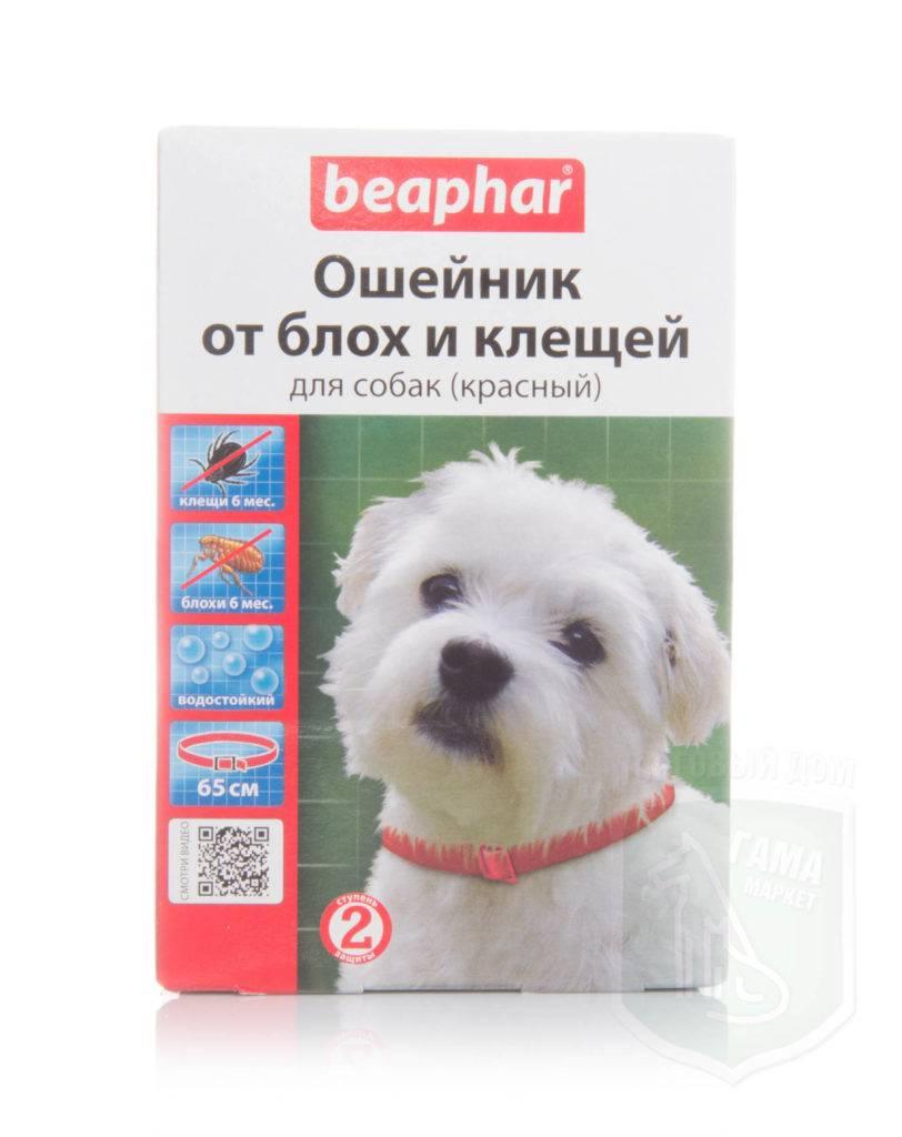 Ошейники от блох для собак и щенков: за и против, цена и отзывы ветеринаров. как работают, сколько действуют, можно ли купать с ними и когда нужно надевать?