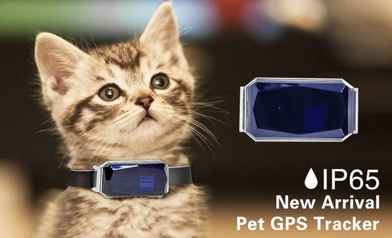 Топ-7 лучших gps ошейников для собак и кошек: как выбрать, плюсы и минусы, отзывы