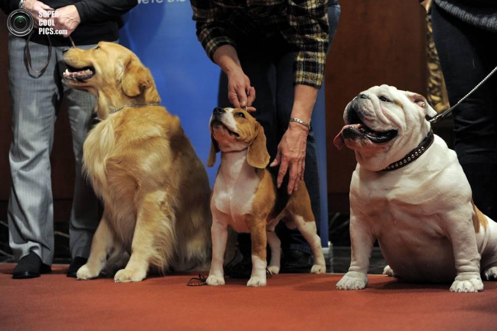 Самые популярные породы собак в мире: известные, распространенные и знаменитые