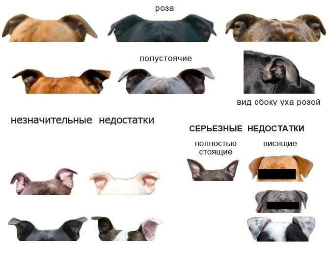 Давайте поговорим с собаками с разноцветными глазами или гетерохромией у собак - здоровье собак 2020