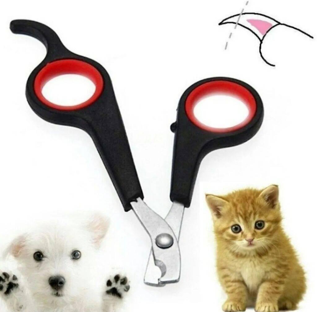 Как подстричь когти кошке в домашних условиях, если она вырывается - как часто нужно проводить процедуру и зачем она нужна