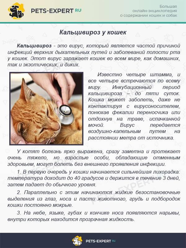 Гепатит у кошек: причины, виды, признаки, диагностика и терапия