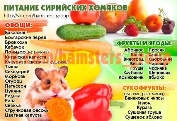 Рейтинг лучших кормов для хомяков (джунгарских и сирийских)