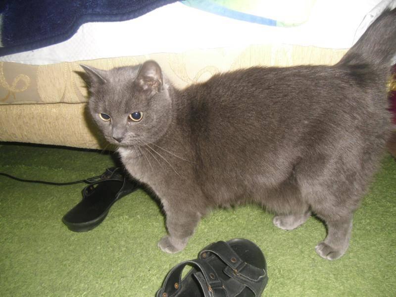 Почему у кота висит живот - oozoo.ru