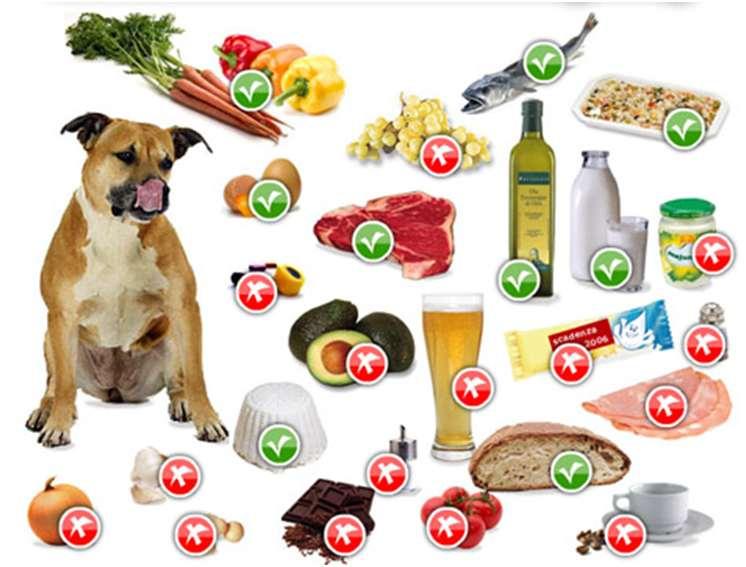 Какие овощи и фрукты можно давать собаке   какие нельзя