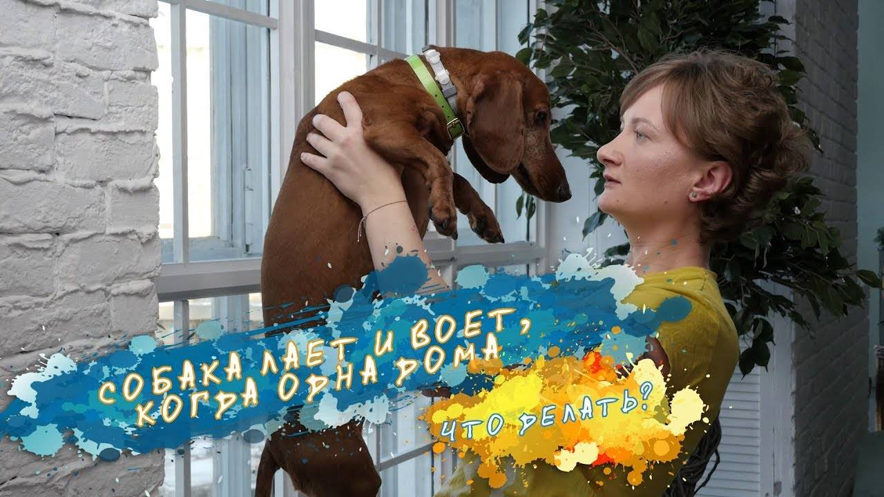 У соседей постоянно воет собака — что надо делать в такой ситуации?