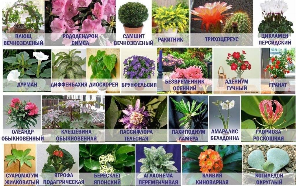 Вредные растения для котов и кошек: ? последствия, первая помощь, безопасные цветы