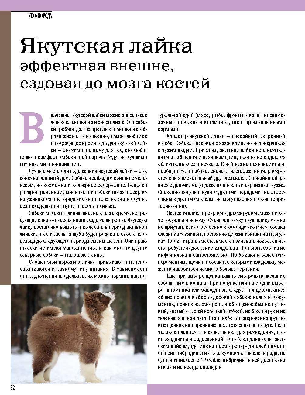 Якутская лайка: описание породы и характеристика, стоимость щенка
