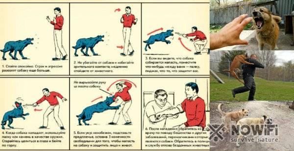 Как себя вести, если нападает собака? что делать? советы кинолога