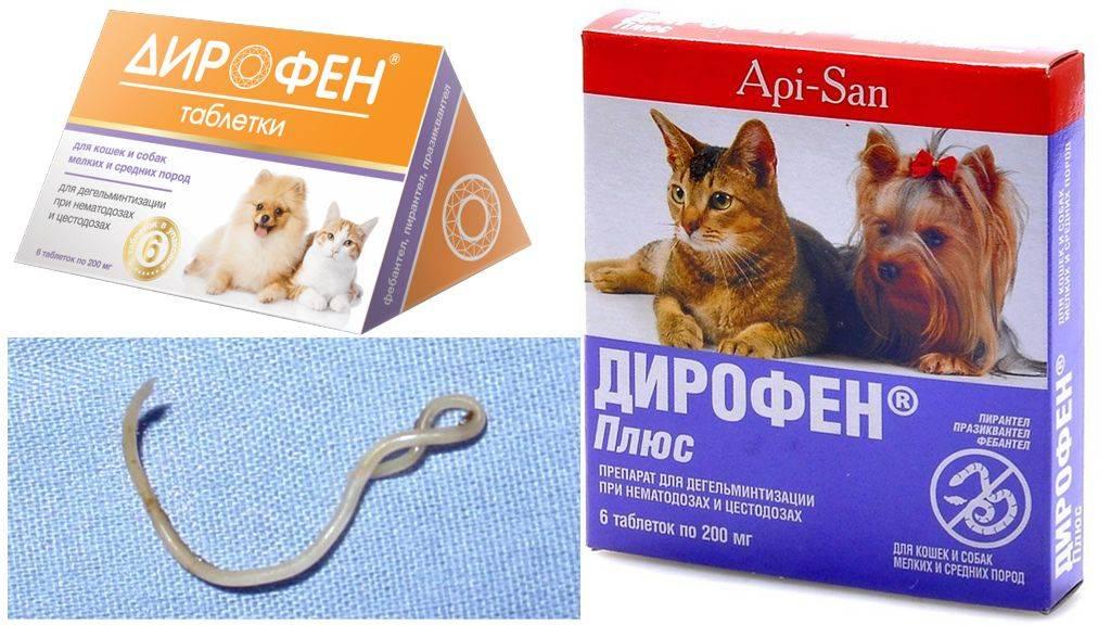 Глисты у кошек: признаки, симптомы, лечение и медикаменты